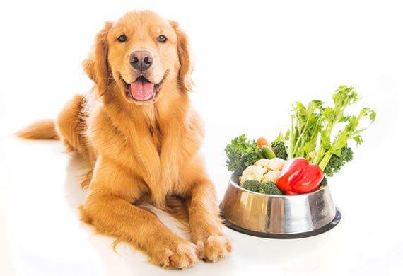 Dogs Like Veggies