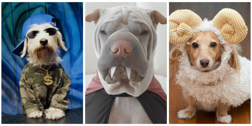 50 of the Cutest Halloween Costumes for Dogs