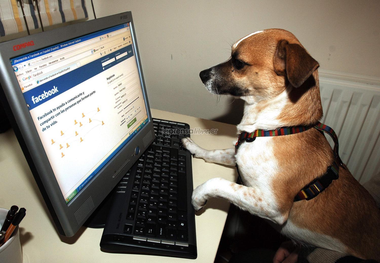 Mi Mascota ya puede tener Facebook