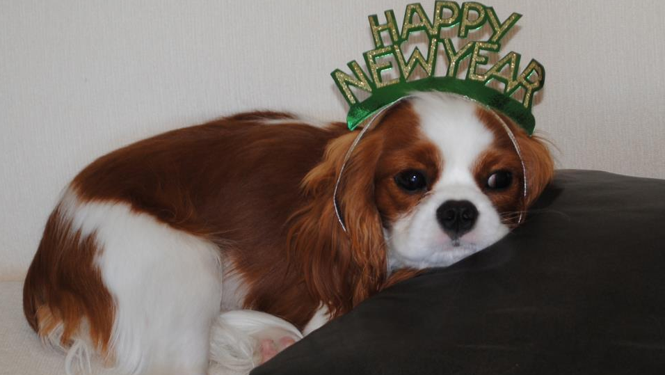 10 Ways to Celebrate the New Year with Your Cavaliers