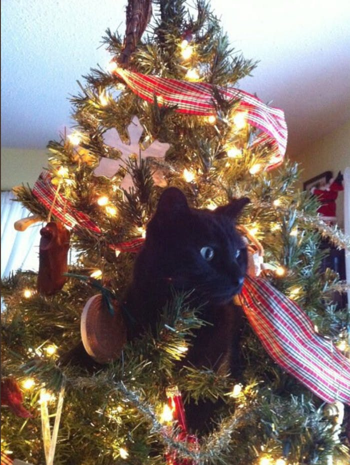 Why Cats Love Destroying Christmas Trees, According to Science