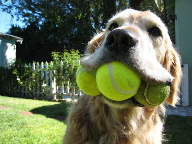 Don't Tell Your Dog, But The Tennis Ball Has Some Dangerous Flaws. Here's an Alternative.