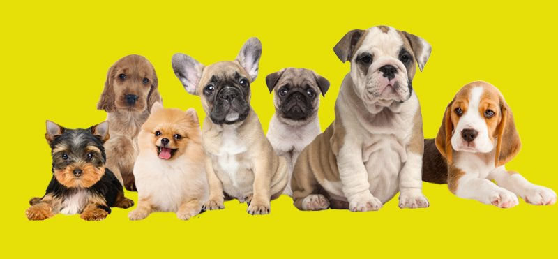 What Your Dog's Breed Can Say About Your Personality?