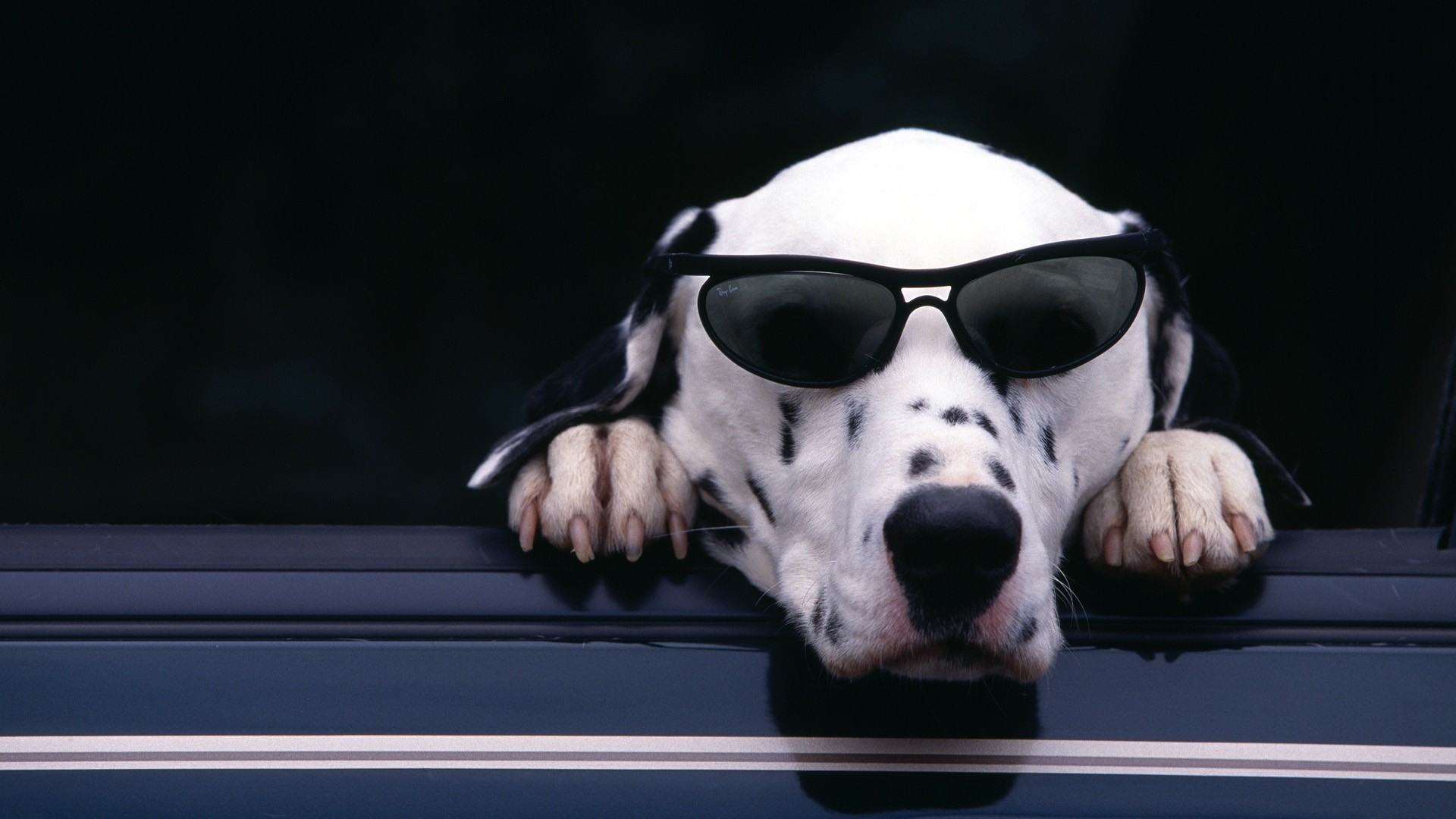 9 Sings Your Dalmata Thinks He's Boss