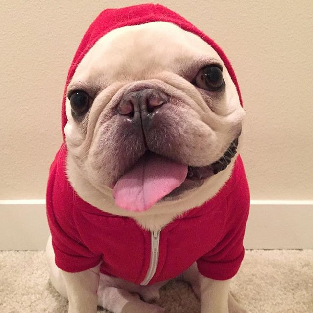 9 Things Your French Bulldog Wants to Tell You