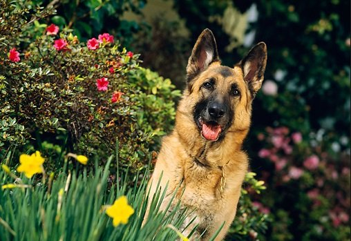 9 Products That Will Make Your German Shepherd Happier