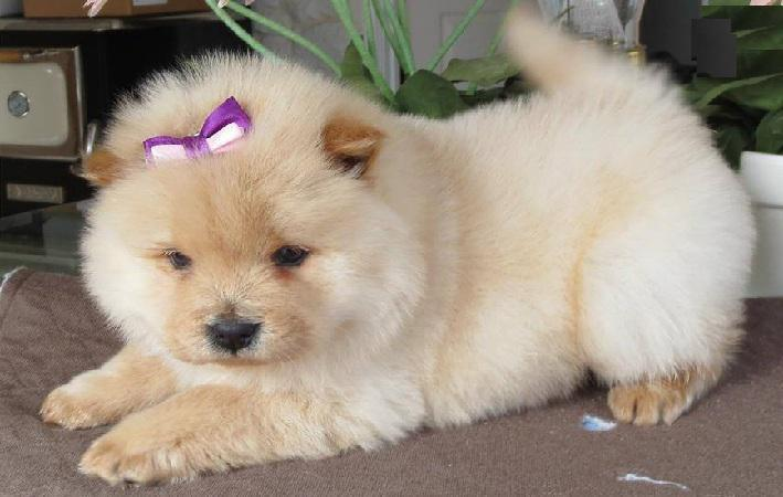 1 Talk To Your Chow