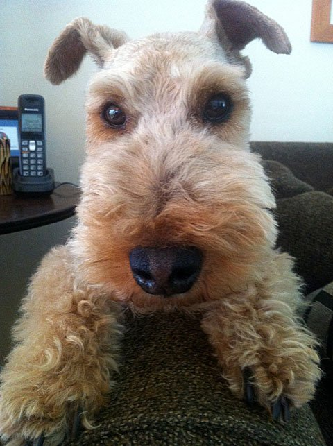 9 Things Your Welsh Terrier Wants to Tell You