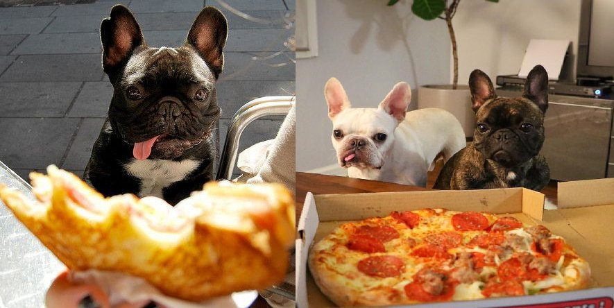 11 Things You Know To Be True When Your French Bulldog Is Always Hungry