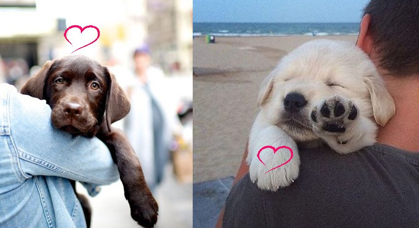 9 Reasons You Should Date Someone With A Labrador