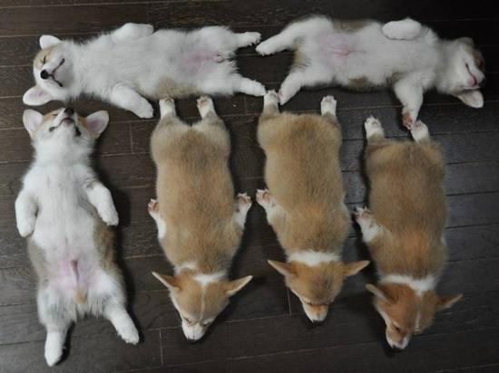 The 7 Best Things About A Corgi