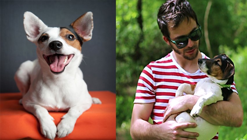 10 Signs Your Jack Russell Terrier Is Obsessed With You!