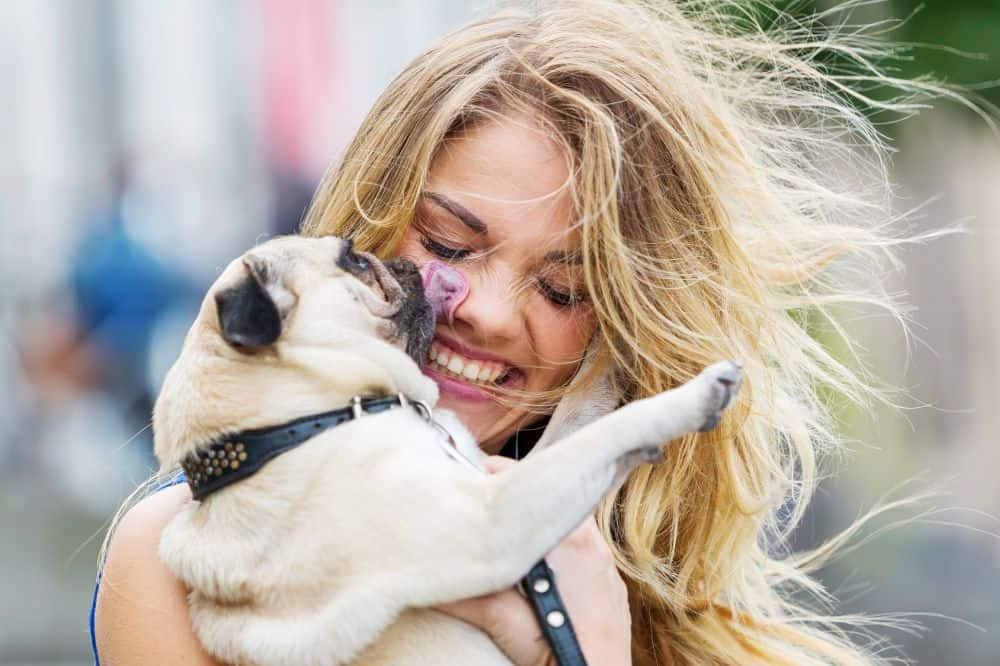 9 Signs Your Pug Is Your Absolute Best Friend