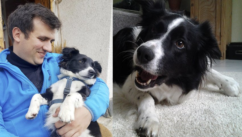 "9 Signs Your Border Collie is Actually Your ""Baby"""