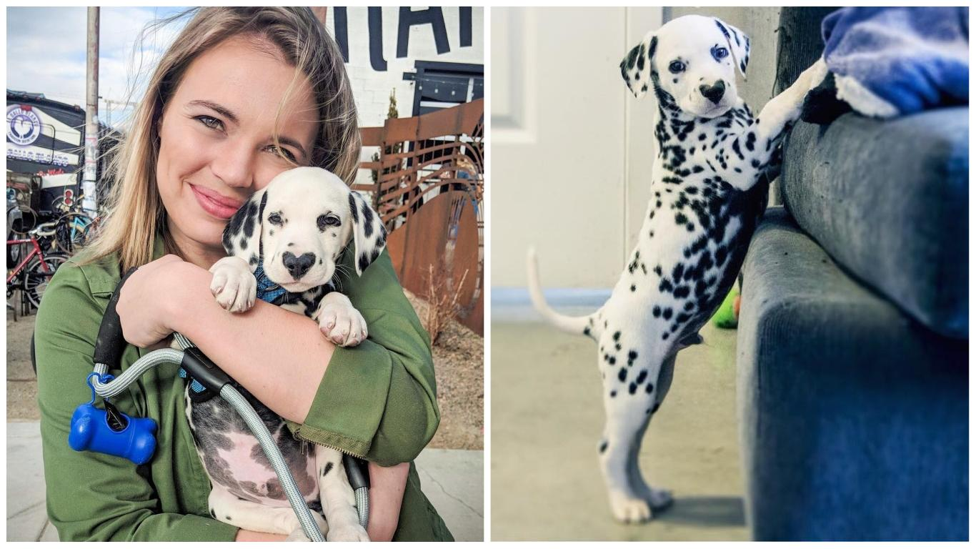 9 Reasons You Should Date Someone With A Dalmata