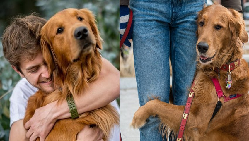 9 Reason Golden Retriever Are Underrated, It is Time They Get Some More Love