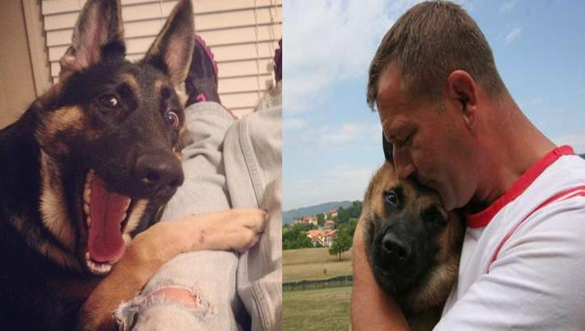 9 Stranger Ways Your German Shepherd Express Their Undying Love For You
