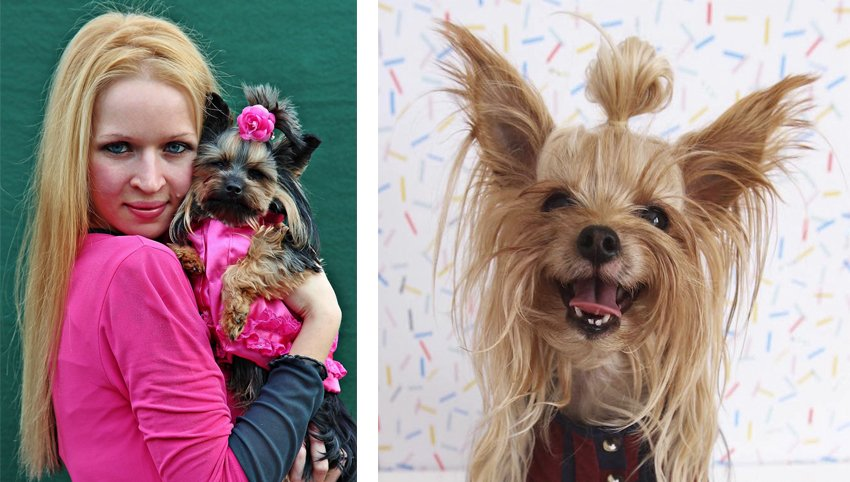 9 Signs Your Yorkie Is Your Absolute Best Friend