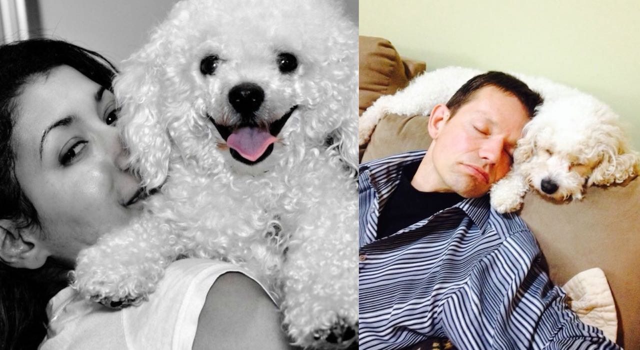 10 Ways Your Bichon Frise  Will Improve Your Quality Of Life