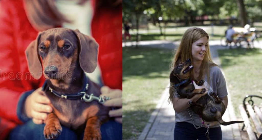 10 Amazing Ways Your Dachshund Will Change Your Life Extremely