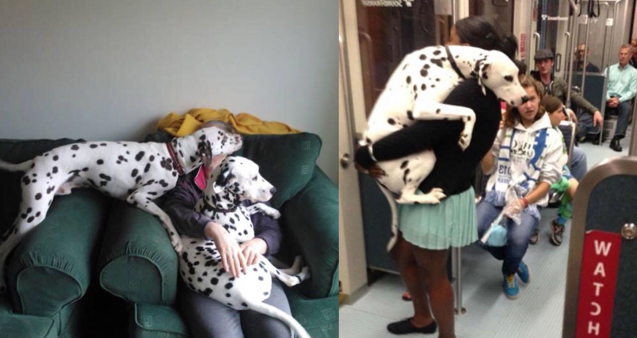 10 Amazing Ways Your Dalmatian Will Change Your Life Extremely
