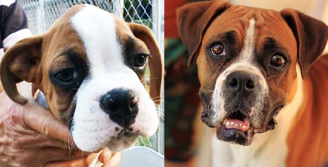 9 Reasons You Should Cuddle Your Boxer More Often
