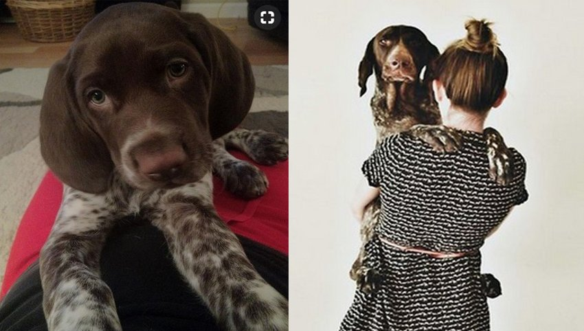 9 Things that German Shorthaired Pointer Love