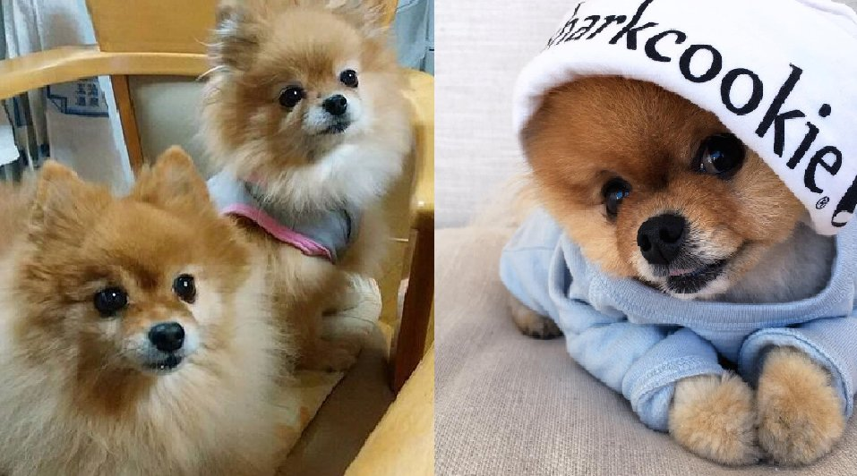 The 6 Best Things About Pomeranian