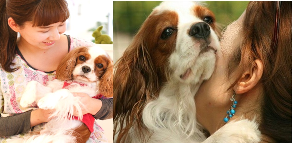 "9 Signs Your Cavalier is Actually Your ""Baby"""