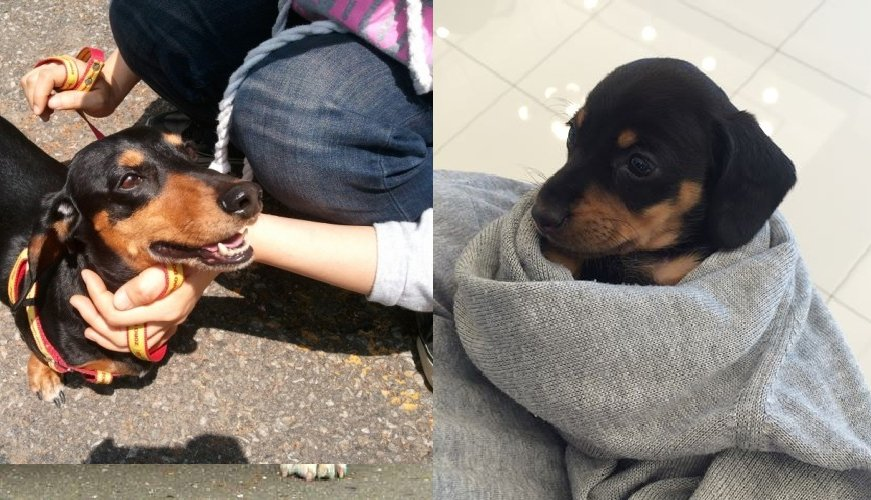 9 Reasons Why Dachshunds Should Be Illegal