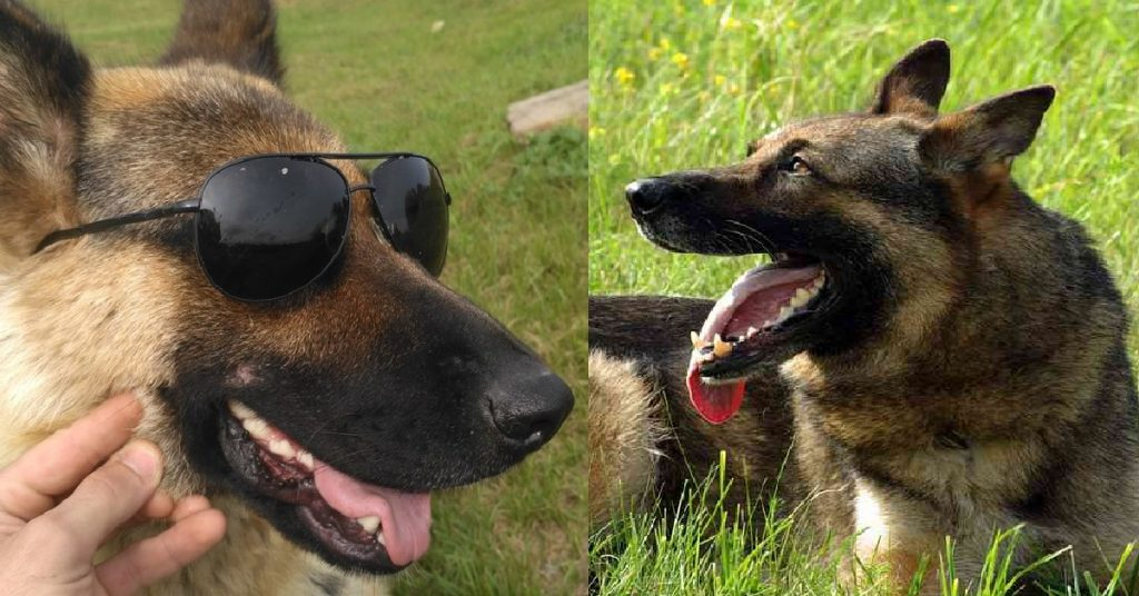 15 Ways Your German Shepherd Can Change A Bad Day To The Best One