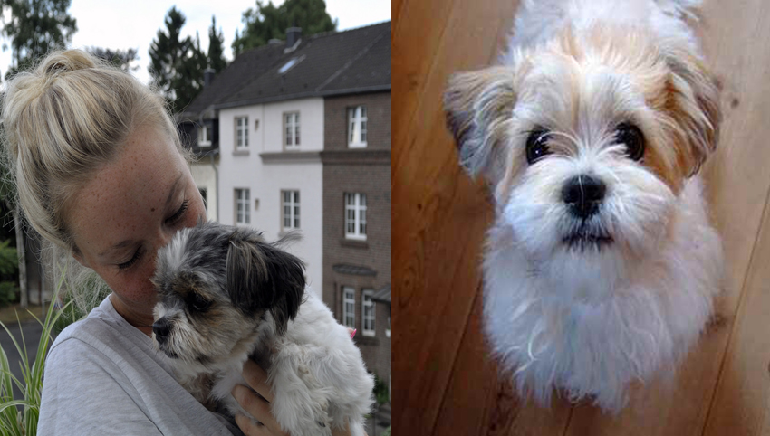 7 Ways to Know if Your Shih Tzu Bonded to You