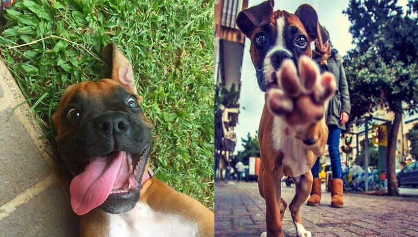 9 Signs You're Completely Obsessed With Boxer