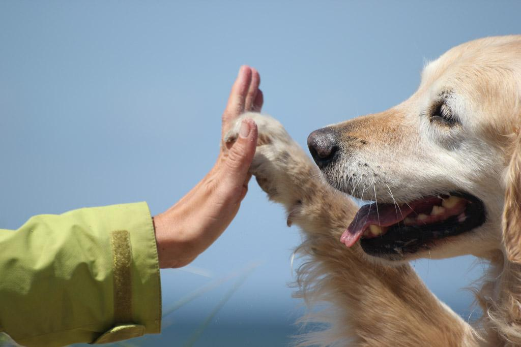 11 Overwhelming Moments Of Love Only Golden Retriever Can Understand