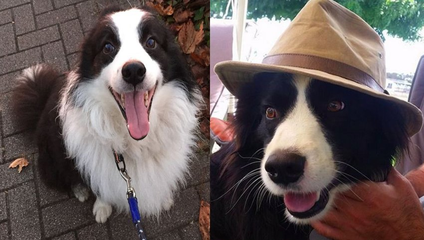 9 Things Your Border Collie Wants to Tell You