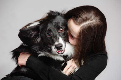 10 Reasons Why Border Collie  Are Perfect