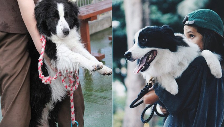 9 Weird Things We Do As Border Collie Parents
