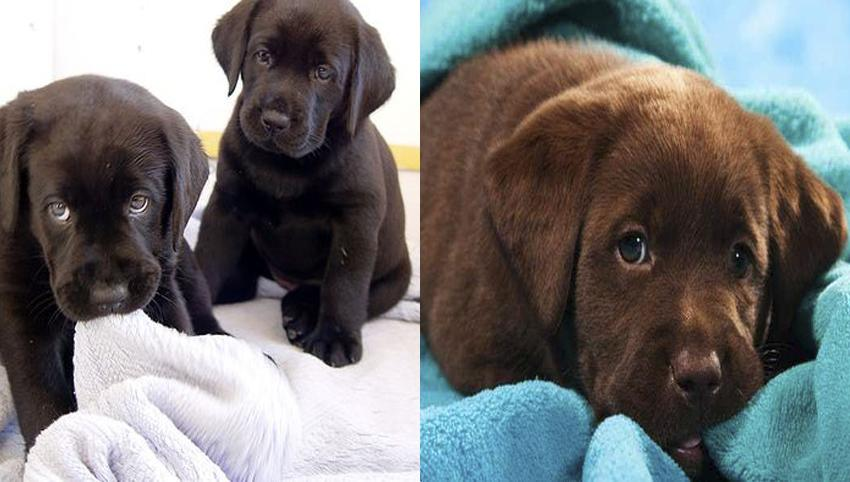 9 Rules Labradors Have For You