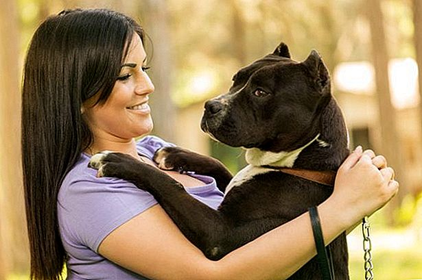 9 Reasons You Should Date Someone With A Pitbull