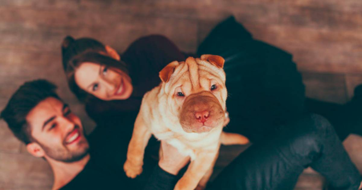 9 Reasons You Should Date Someone With A Shar Pei