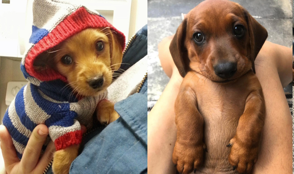 9 Reasons You Should Cuddle Your Dachshund More Often