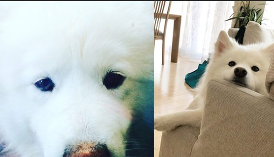 6 Ways You May Be Hurting Your Samoyed Feelings Without Even Knowing It