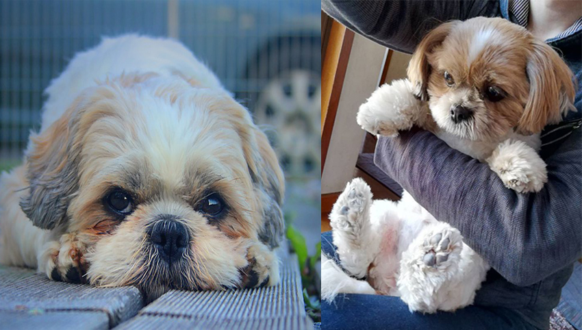 6 Ways You May Be Hurting Your Shih Tzu's Feelings Without Even Knowing It