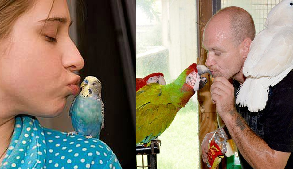 9 Signs You Have Become a Crazy Bird Person