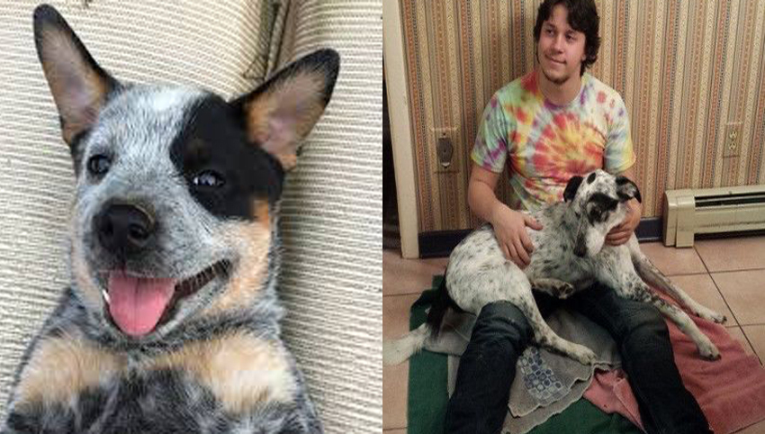 9 Reasons You Should Date Someone With A Heeler