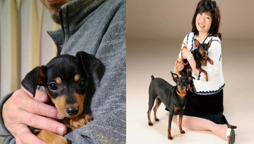 9 Reasons You Should Date Someone With A Mini Pinscher