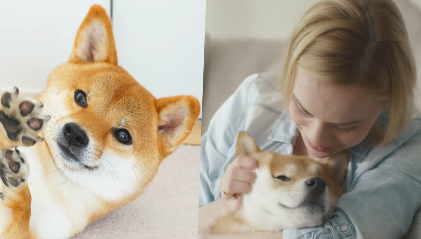 9 Reasons You Should Date Someone With A Shiba